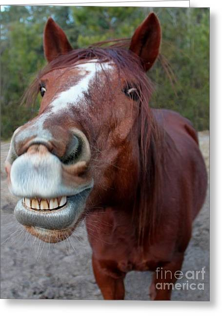Happy Horse Greeting Card by Christean Ramage