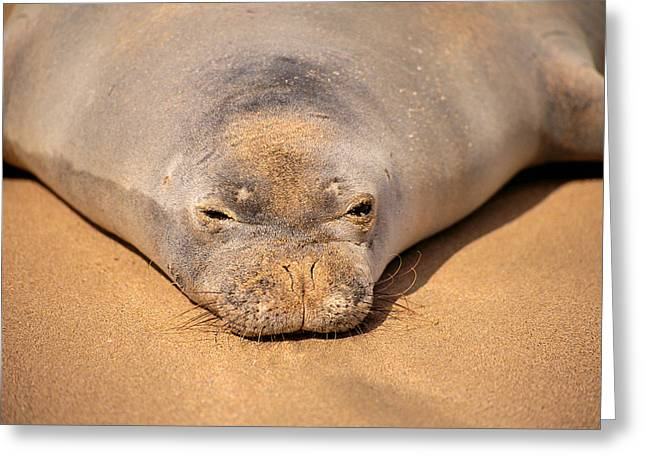 Hawaiian Monk Seal Greeting Card by Dave Fleetham - Printscapes