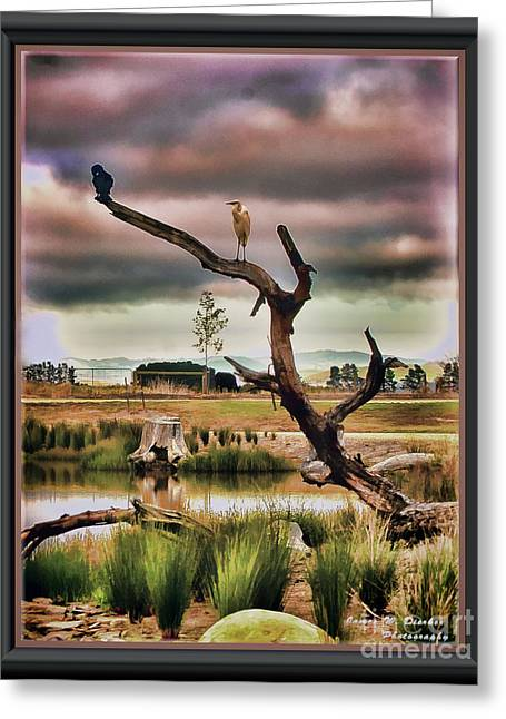 Hdr Wetlands Greeting Card