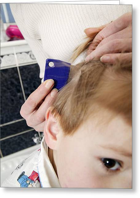 Head Lice Combing Greeting Card