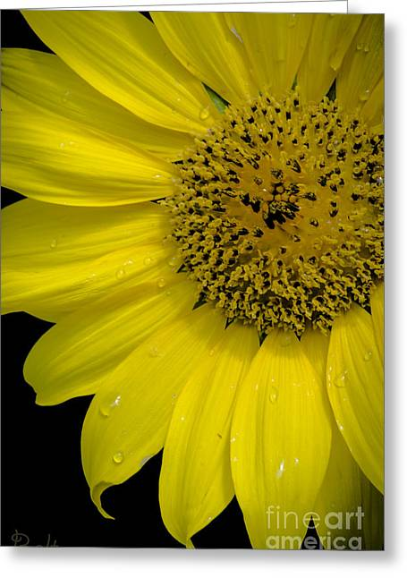 Hello Sunshine Greeting Card by Christine Belt