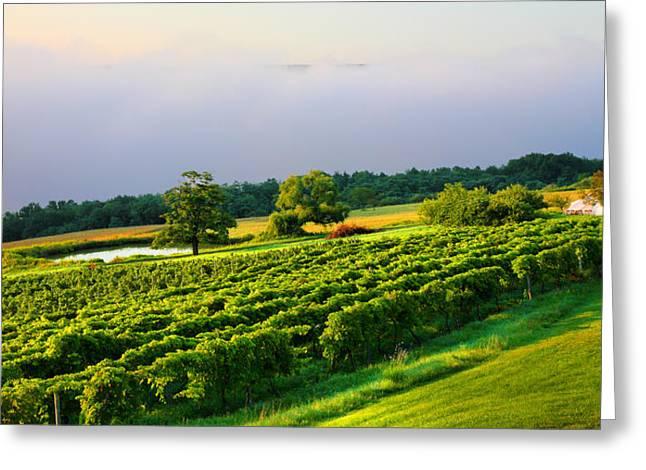 Hillside Vineyard Greeting Card by Steven Ainsworth