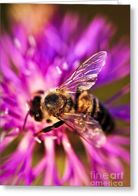 Honey Bee  Greeting Card by Elena Elisseeva