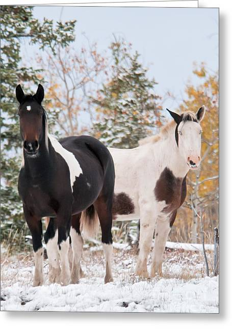 Horses In Snow Greeting Card by Mark Newman and Photo Researchers