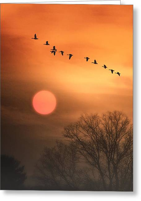 Hot Summer Flight Greeting Card by Tom York Images