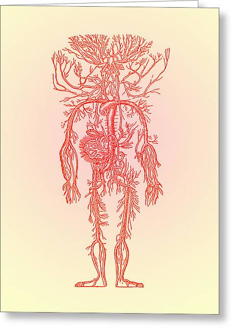 Human Blood Vessels Greeting Card by Mehau Kulyk