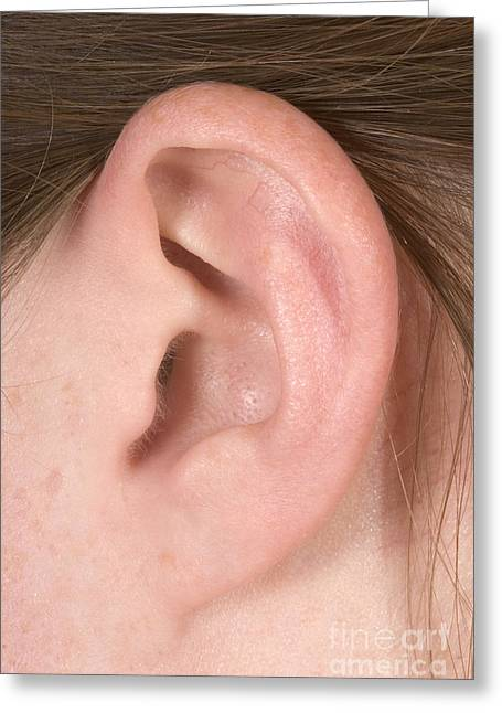 Human Ear Greeting Card by Ted Kinsman