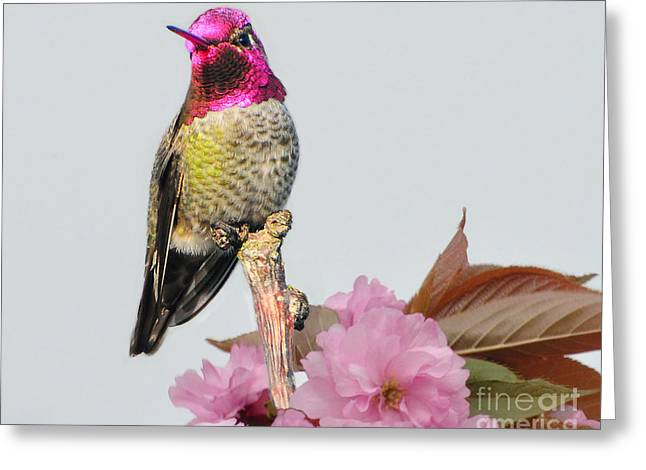 Greeting Card featuring the photograph Hummer N Blooms by Jack Moskovita