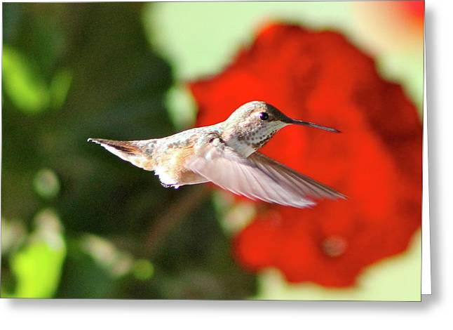 Hummingbird 4 Greeting Card