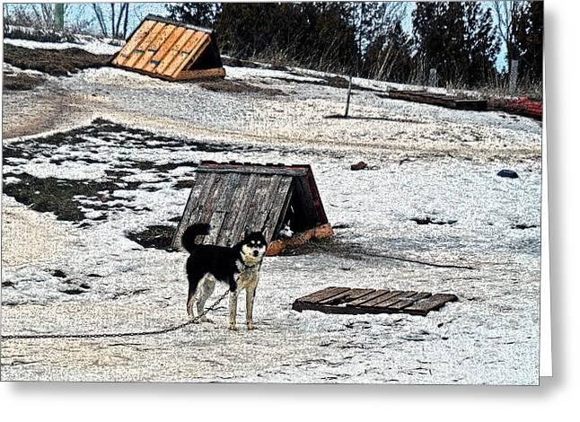 Husky Camp Greeting Card by Cyryn Fyrcyd