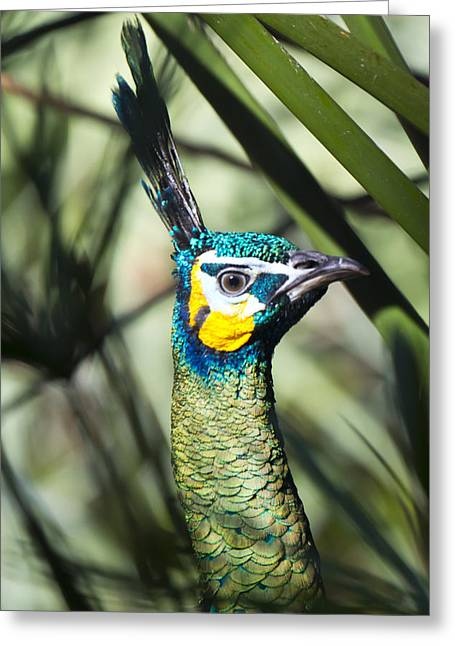 I Am Looking At You Too Greeting Card by Nicholas Evans