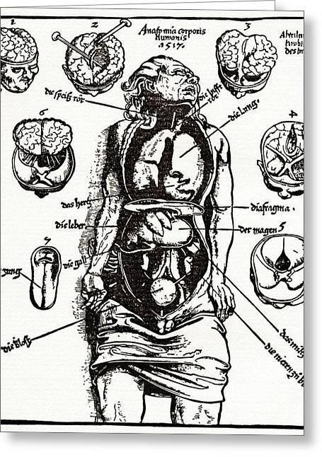 Internal Anatomy, 16th Century Diagram Greeting Card by Sheila Terry