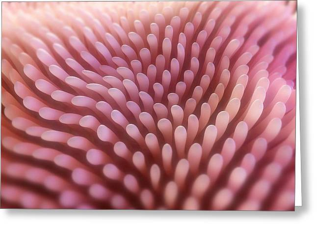 Intestinal Villi, Artwork Greeting Card by Sciepro