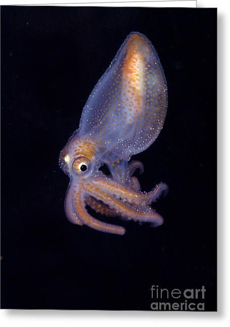 Juvenile Octopod Greeting Card