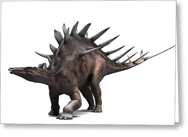 Kentrosaurus Dinosaur, Artwork Greeting Card by Sciepro
