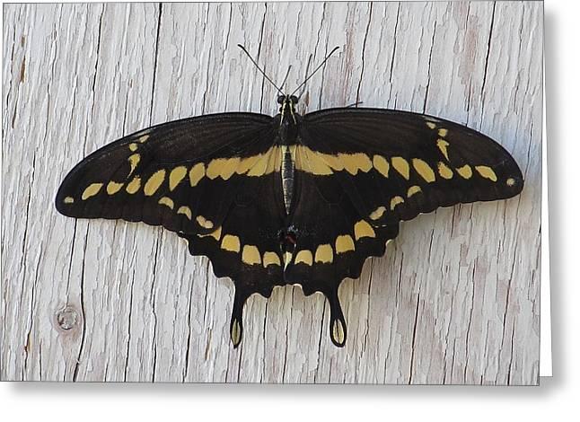 Kewl Moth Greeting Card
