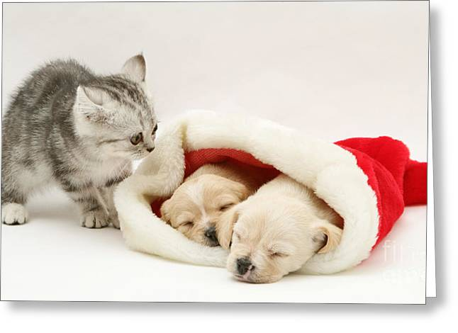 Kitten With Pups Greeting Card by Jane Burton