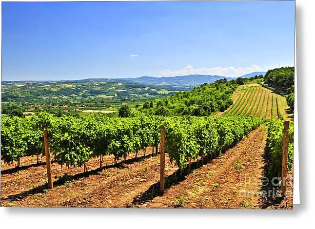 Landscape With Vineyard Greeting Card by Elena Elisseeva