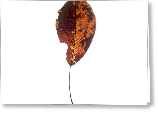 Leaf In Autumnal Colours Greeting Card by Bernard Jaubert