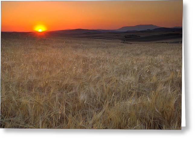Light Fields Greeting Card by Guido Montanes Castillo