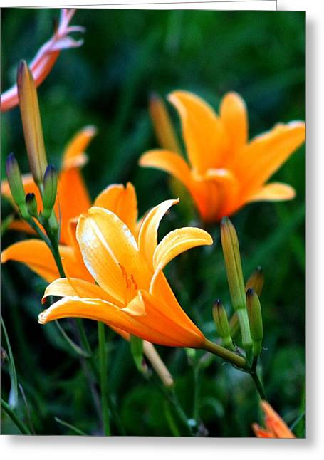 Lilies Greeting Card by Elizabeth  Doran