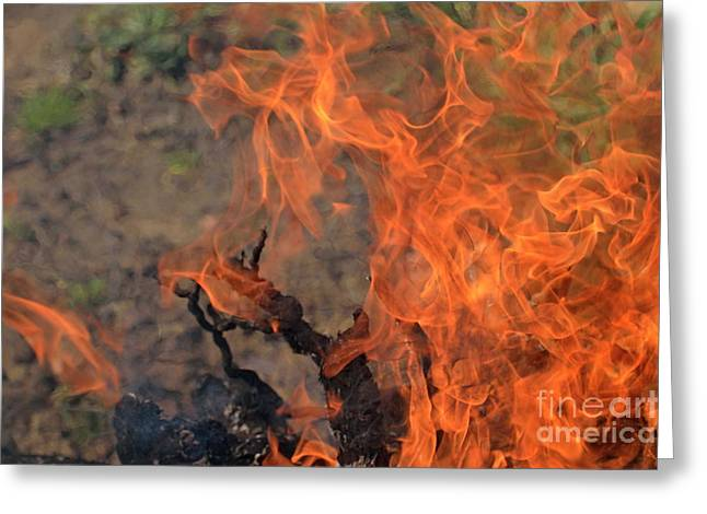 Log Fire And Flames Greeting Card by Sami Sarkis