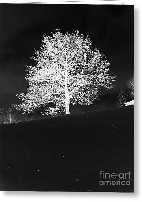 Lone Tree Greeting Card by David Bearden