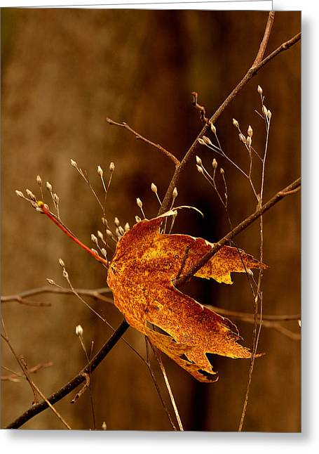 Lonely Leaf Greeting Card
