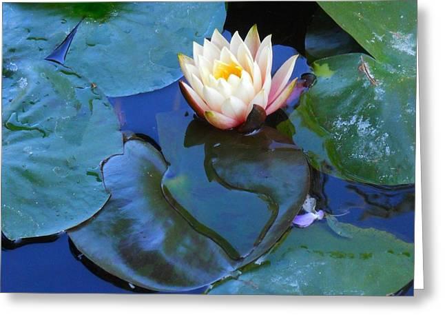 Lotus 2 Greeting Card by Sarah Vandenbusch