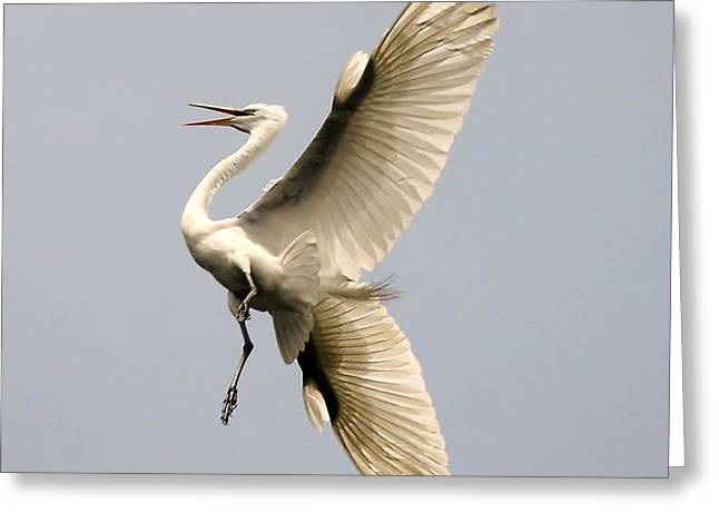 Magestic Greeting Card by Paulette Thomas