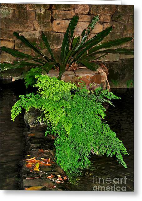 Maidenhair Fern Greeting Card by Kaye Menner