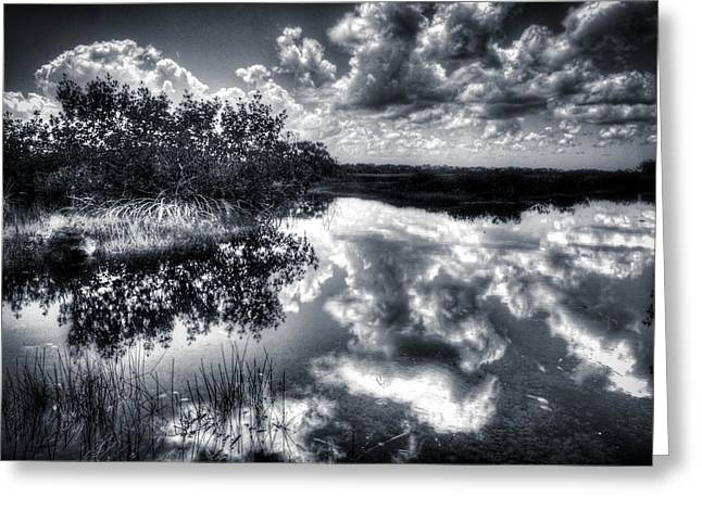 Mangroves In The Morning Greeting Card by Bob Hartmann
