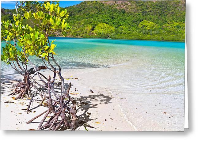 Mangroves Greeting Card by MotHaiBaPhoto Prints