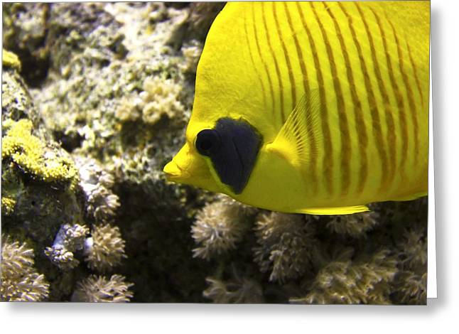 Masked Butterflyfish Greeting Card