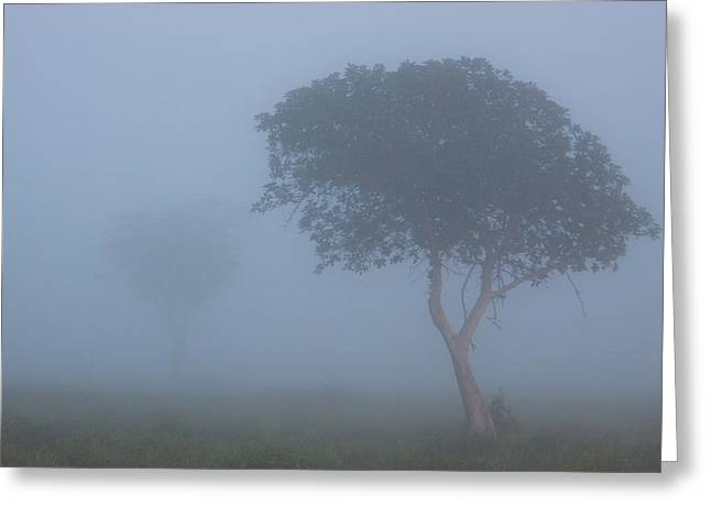 Misty Morning Greeting Card by Hein Welman