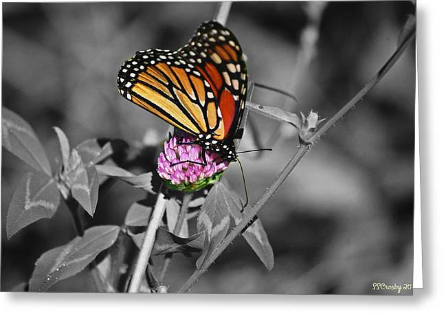 Monarch Butterfly On Clover Greeting Card