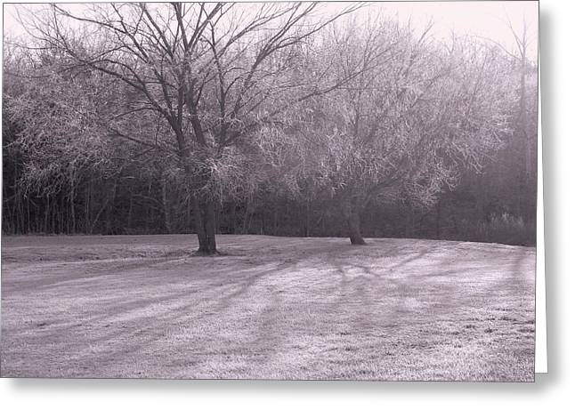 Morning Frost Greeting Card