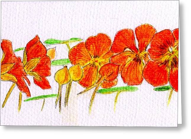 Greeting Card featuring the drawing Nasturtiums by Barbara Moignard