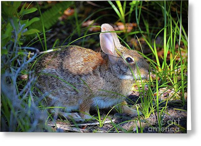 Nature And Wildlife Series Greeting Card by Terry Troupe