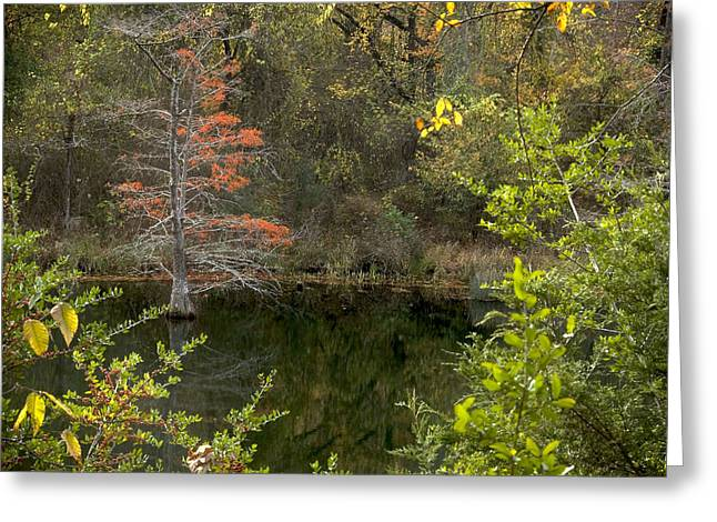 Natures Frame Greeting Card by Cindy Rubin