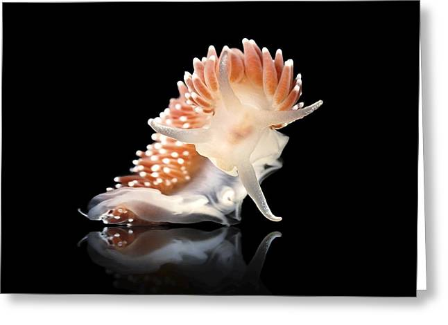 Nudibranch Greeting Card by Alexander Semenov