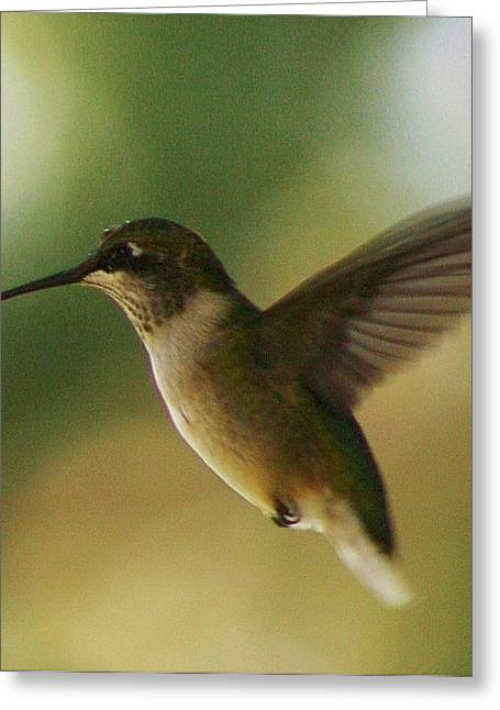 On The Fly Greeting Card by Bruce Bley