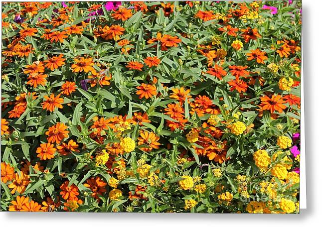 Orange And Yellow Greeting Card by Theresa Willingham