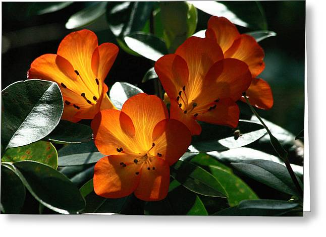 Orange Gathering Greeting Card by Larry Parker