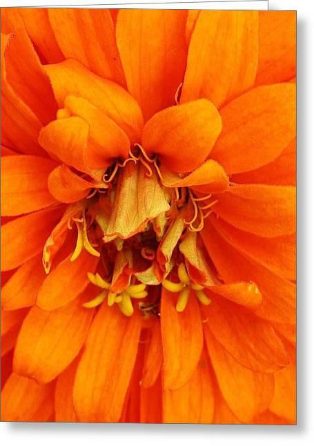 Orange Splendor Greeting Card by Bruce Bley