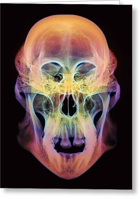Orangutan Skull Greeting Card by D. Roberts