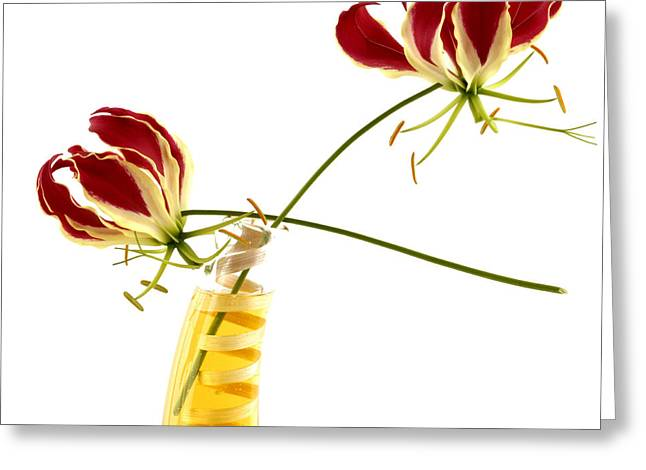 Orchid Greeting Card by Bernard Jaubert
