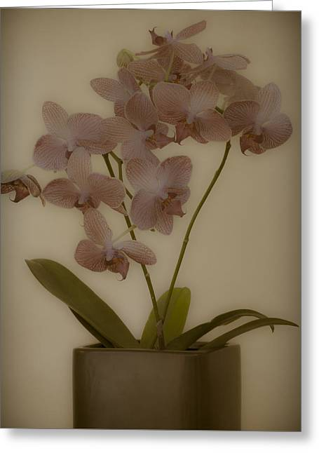 Orchid Greeting Card by James Bethanis