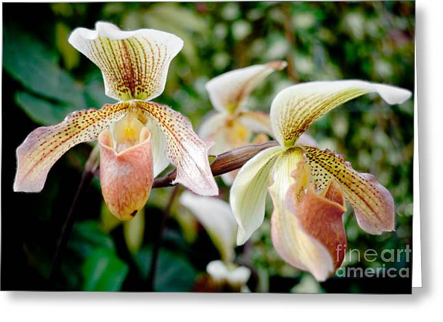 Orchids Greeting Card by Yurix Sardinelly