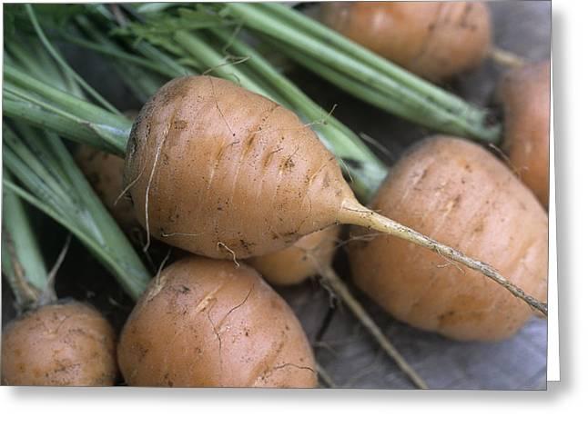 Organic Carrots (daucus Carota 'parmex') Greeting Card by Maxine Adcock